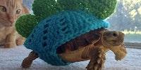 Tortoise cozy.