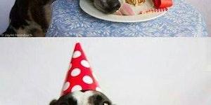 Happy birthday, pup.