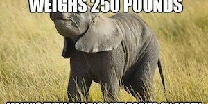 Baby elephants can weigh up to 250 pounds at birth.