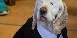 Blind senior doggo gets surprise party at shelter