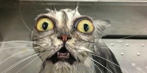 Gollum cat must know...