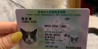 In Honk Kong, pets have their own ID cards.