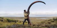 A woolly mammoth's tusk is unearthed from a Siberian riverbed
