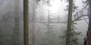 This bridge in Canada looks like it's in Endor