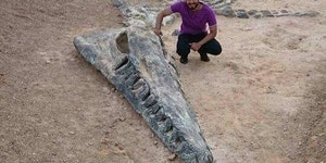 Incredible Kronosaurus fossil discovery