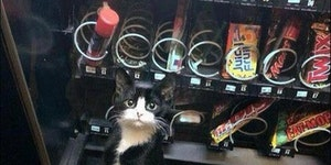 Kit kat got stuck