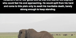The end of an elephant
