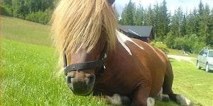 Emo horse.