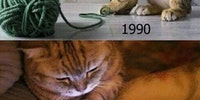 90s Cats Will Understand