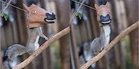 Horse head squirrel feeder.