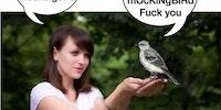Mocking Bird Stings...
