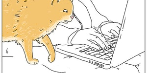 Kitty is not pleased with your internet history.