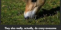 FJORD HORSES :D
