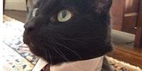 Sir cat.
