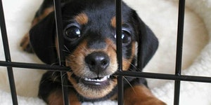 Despite all his rage, he's still just a widdle puppy in a cage