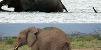 The life of a baby elephant