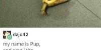 Snooze banana