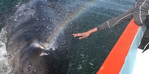 Baby whale initiates a rare transfer of rainbow power with human