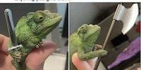 Chameleon warrior