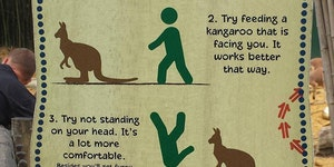 Kangaroo feeding tips.