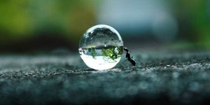 Just an ant.