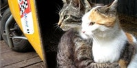 Scumbag cats.