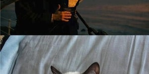 Grumpy Cat watches Titanic.