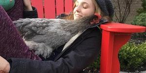 Chicken Cuddles