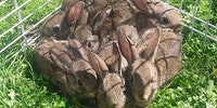 1 Square Foot Of Bunny