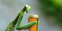 Mantis life