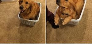 He fits!