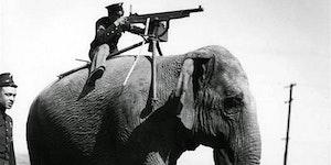 Machine gun mounted on an elephant