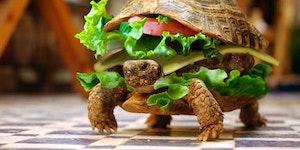 Turtle turtle.