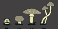 Know your mushrooms.