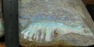 Opalized fish fossil