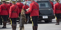 K9 dog Danny, sniffs the stetson of his partner, slain Const. David Ross, during the funeral procession for three RCMP officers who were killed on duty.