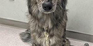 Greywolf floof