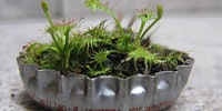 A micro-garden in a bottle cap