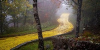 The Yellow Brick Road in North Carolina's abandoned Wizard of Oz theme park