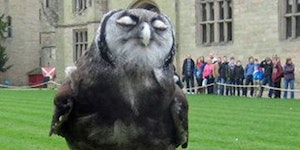 Britain's smuggest owl.