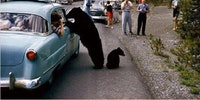 The dark days of Yogi Bear..