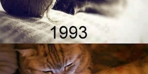 Cats these days...