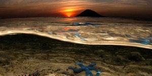Starfish in Indonesia