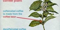 Regular vs. Decaf coffee.