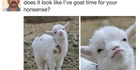 You Tell Them, Goat