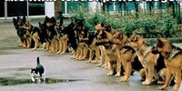 The final test of police dogs.
