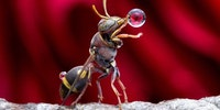 A wasp having a quick drink before stopping by your BBQ.