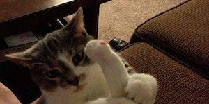 Scumbag cat.