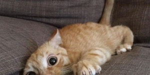 kitty crazies.
