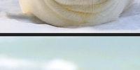ROFLing seals